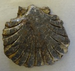 c. 15th century lead pilgrim badge, in the shape of a scallop shell, found on the beach of St. Monans, Fife. From the collection of Fife Council Libraries & Museums, St Andrews Museum.