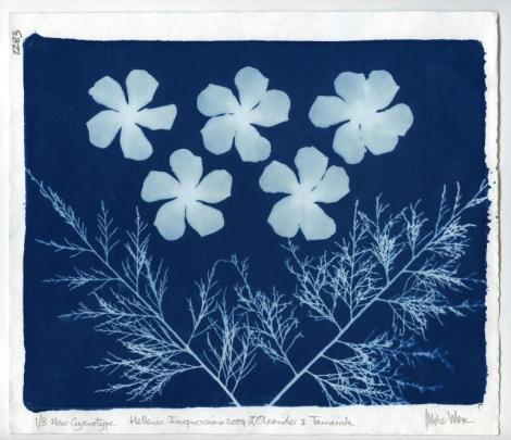 Oleander & Tamarisk (2004), a cyanotype by Mike Ware.