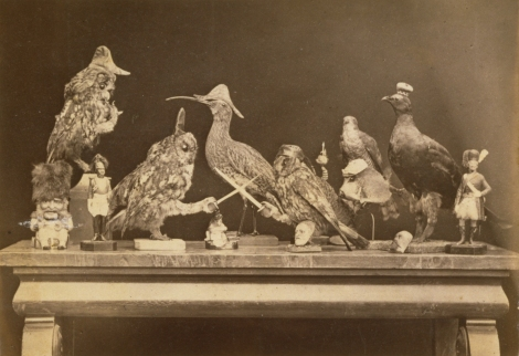 """Mock battle tableau"" between stuffed birds and fish, military figurines, toby jug and human head plaques by Dr John Adamson, 1860.  (St Andrews ALB-49-45-2)"