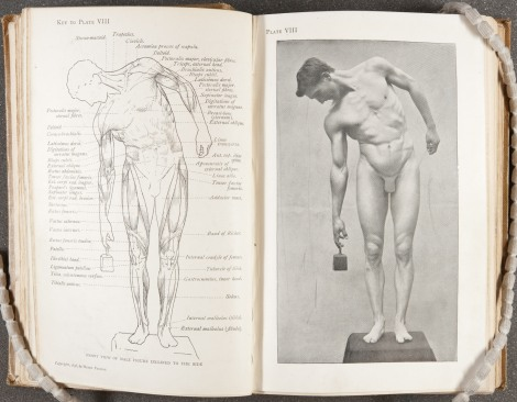 """Front view of male figure inclined to the side,"" page 62 of Arthur Thomson's A handbook of anatomy for art students (1896). St Andrews copy at Photo NC760.T5"
