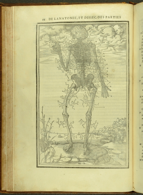 An anatomical diagram of the nervous system from Estienne's Anatomy (1546) (St Andrews TypFP.B46C£)