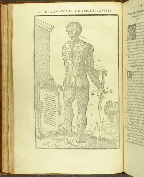An anatomical diagram of the venous system from Estienne's Anatomy (1546) (St Andrews copy at TypFP.B46CE)