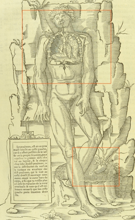 A full-page woodcut having been reused for Estienne's Anatomy (1546), the new portions are highlighted in orange (St Andrews copy at Typ