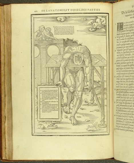 An anatomical illustration of a cross-section of a brain from Estienne's Anatomy (1546) (St Andrews copy at TypFP.B46CE)