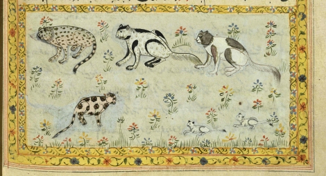 "Cats from 17th or 18th century manuscript copy of ""The Book of Wonders of the Age"" (St Andrews ms32(o))"