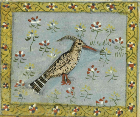 "A hoopoe from 17th or 18th century manuscript copy of ""The Book of Wonders of the Age"" (St Andrews ms32(o))"