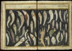 "Many bizarre fish, including a hedgehog-headed fish, an owl-headed fish and a fish with a person coming out of its head! From 17th or 18th century manuscript copy of ""The Book of Wonders of the Age"" (St Andrews ms32(o))"