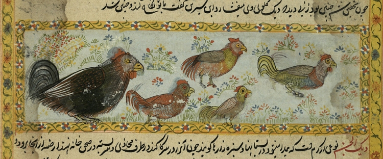 chickens from the Book of Wonders, ms32 (o)