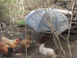Modern day rain shelter
