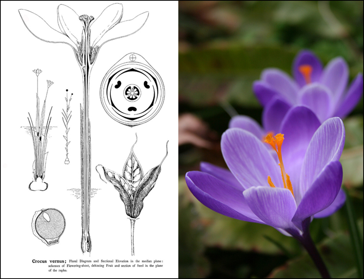 Reading The Collections  Week 5  Types Of Floral Mechanism