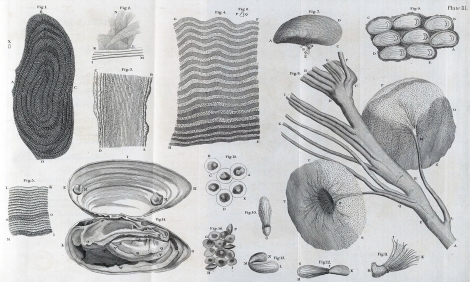 Structures observed from the examination of eel (Fig. 1-6), mussel (Fig. 7-15) and oyster (Fig. 16) sQH271.L2H7 Plate III.