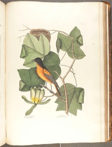 Image from Catesby's Natural History of Carolina (rff QH104.C2).