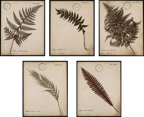 Botany_1
