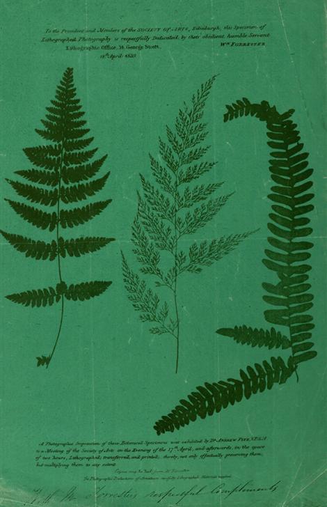Fern lithograph_1