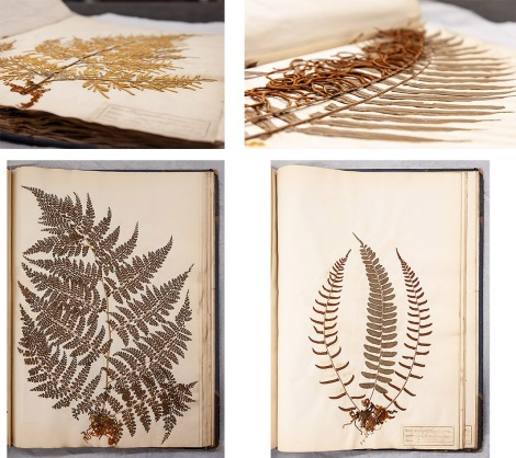 Ferns album_1